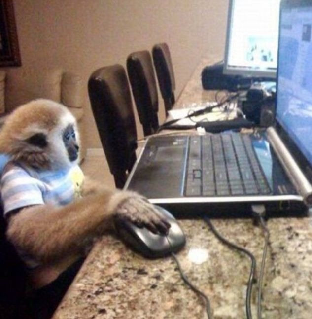 Writer Monkey Pete, seen here hard at work even though it was his lunch hour