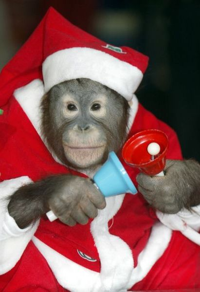 Writer Monkey Pete gets into the festive spirit